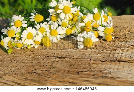 Fresh camomile flowers on the wooden background