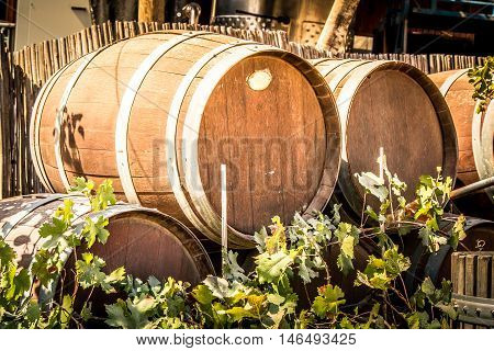 Wooden barrels for wine in the courtyard of the Tura Winery, Israel