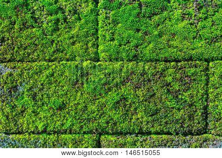 Moss over the brick wall of rural house in Thailand.