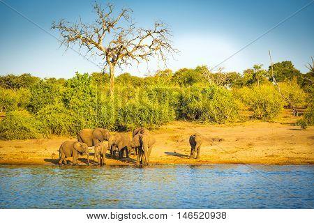 Elephant Herd At Rivers Edge