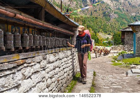 Young Woman Wearing Backpack Trekking Touching Tibetan prayer Wheels or Prayers Rolls Faithful Buddhists.Caravan Animal Donkeys Loaded Bags Background.Himalaya Village Mountains. Horizontal Photo