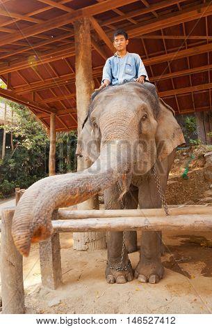 Maesa Elephant Camp Thailand - March 07 2011 - Elephant rider waiting for tourists in Maesa elephant camp