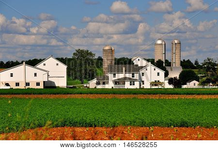 Lancaster County Pennsylvani - June 6 2015: Amish farm complex with silos, farmhouse, barns, and fields of Summer crops *