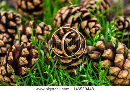 Two gold wedding rings lying on a pile of pine cones in grass