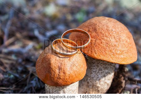 Two gold wedding rings lying on the two porcini mushrooms