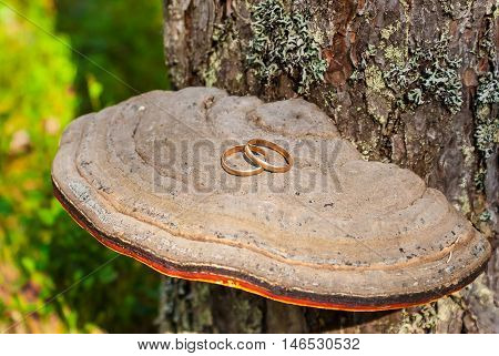 Two gold wedding rings lying on the polypore