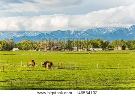 Two horse couples interacting in rural farm with mountains and clouds in Montana