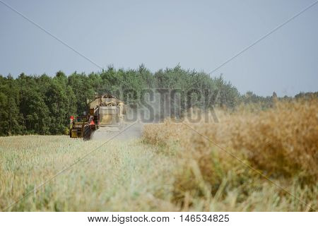 Combine Harvesting The Rape Field