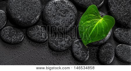 Beautiful Spa Concept Of Green Leaf Calla Lily On Zen Basalt Stones With Drops, Panorama