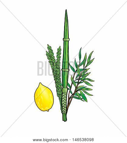 Sukkot. Jewish traditional four species for Jewish Holiday Sukkot. Sukkot symbols Lulav, Etrog for Jewish Holiday Succot. Sukkot festival. Vector illustration. Sukkah