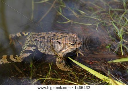 Frog On A Bog
