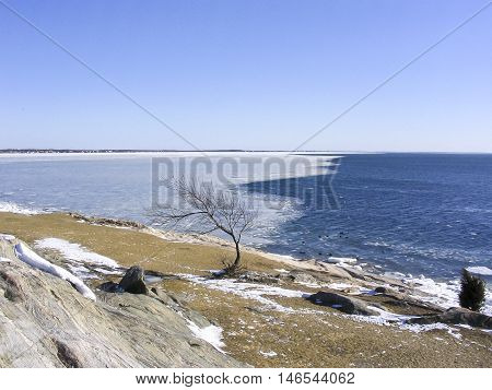 Tree shaped by southwest winds against frozen harbor background