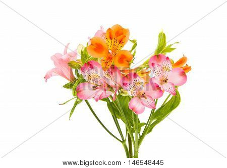 Alstroemeria bouquet  lily on a white background
