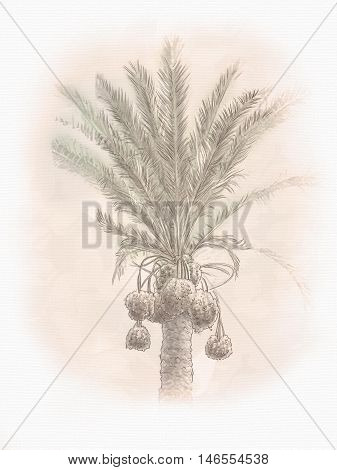 Dates palm branches with ripe dates. In Old city of Jerusalem, Israel. Landscape. Digital Illustration. Hand drawn.