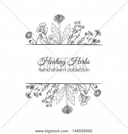 Holistic Medicine. Healing Herbs Illustration. Handdrawn Health and Nature collection. Vector Ayurvedic Herb. Herbal Natural Supplements. Organic print design. Isolated on white background.