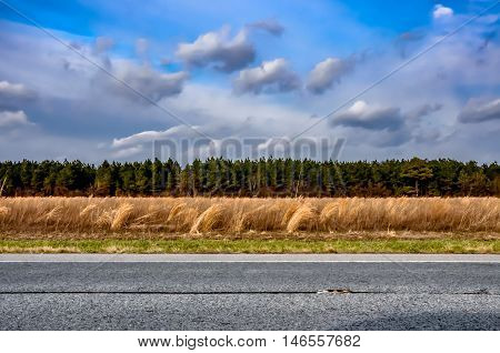Wheat Fields With Tree Line And Clouds