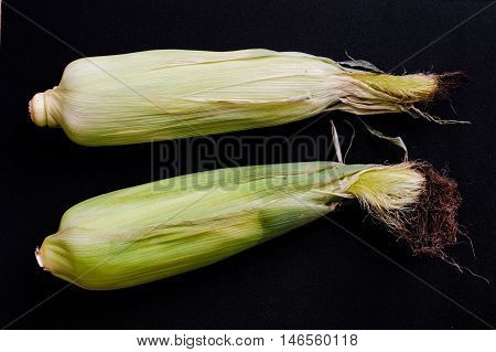 Unopened Fresh Corn With Cob on a Black Background