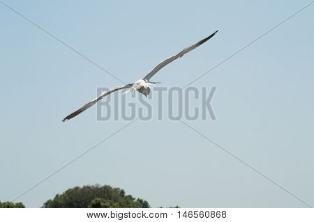 Seagull flying freely in the blue sky