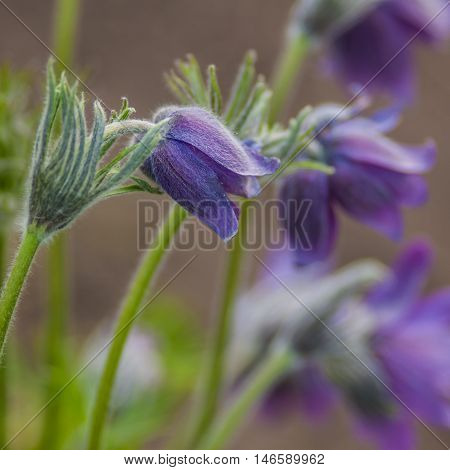 flowers dream of grass on a blurred green background