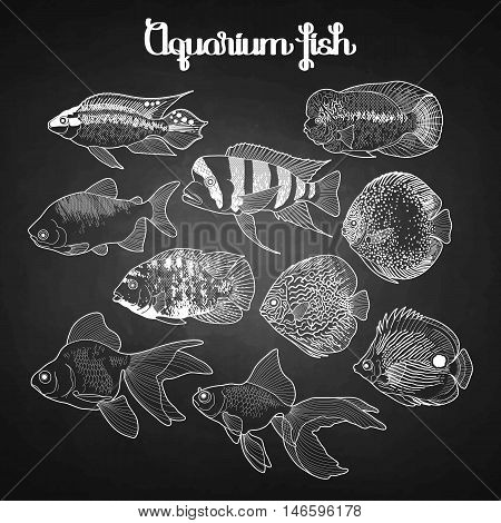 Graphic aquarium fish isolated on the chalkboard. Fresh water creatures.