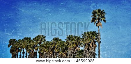 Landscape with a row of Palm Trees
