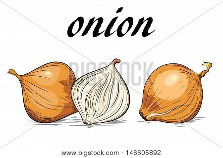 Yellow onion. Isolated on white. Broken and whole bulb.