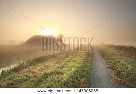 farmland at gold misty sunrise in Netherlands