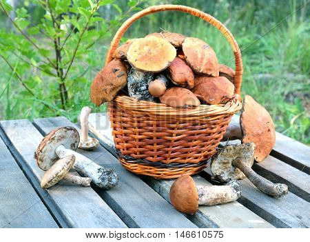 Still life with many edible mushrooms in brown wicker basket on wooden table closeup wooden table. Front view outdoors against green grass close up