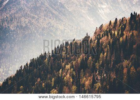 Coniferous Forest Landscape aerial view autumn season Travel concept