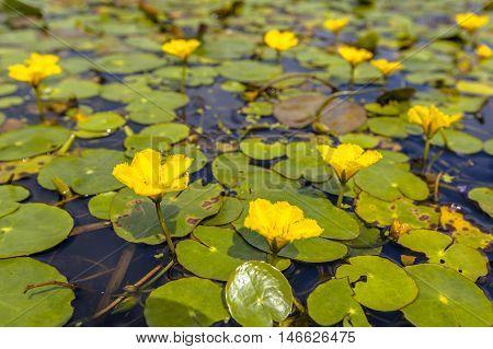 Yellow Floating Heart