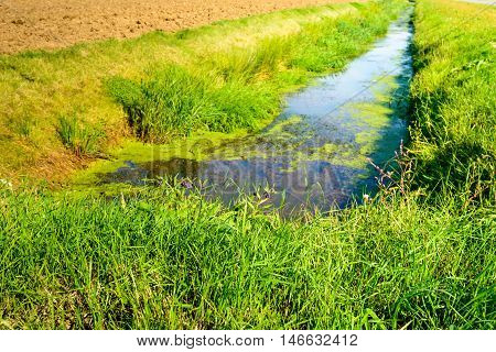Polder ditch in summertime. On the water surface is duckweed and on the banks reeds and grass is growing.