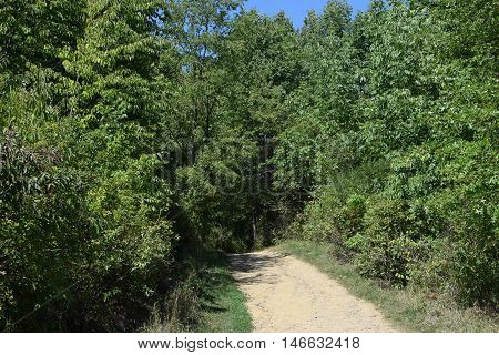 a dirt path leading into a forest