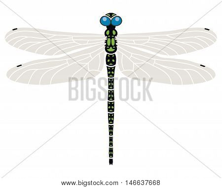 vector abstract dragonfly symbol isolated on white background