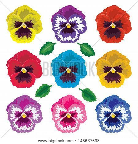 vector collection of pansy flowers and leaves