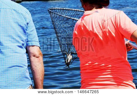 A girl catches a blue claw crab in a crabbing net
