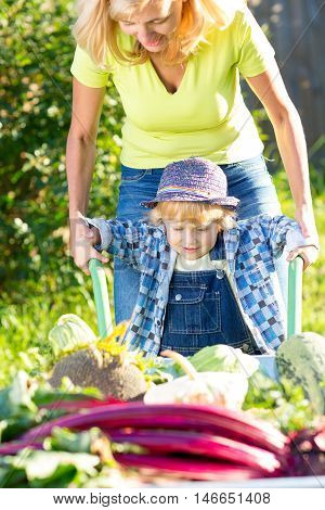 Kid boy and mother in domestic garden. Adorable child standing near the wheelbarrow with vegetables harvest. Healthy organic vegetables for children.