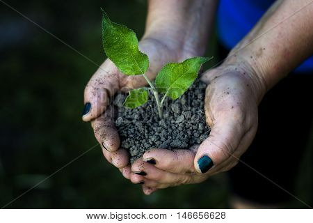 Hands holding seedling trees in the park.