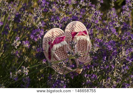 Baby shoes on a lavender stem in a field