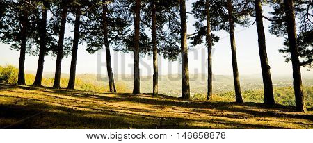 Panoramic View Of Forest
