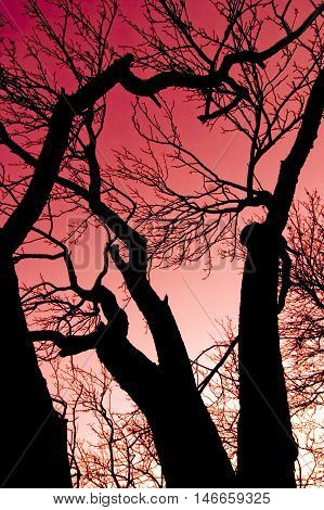 Red Sky And Tree