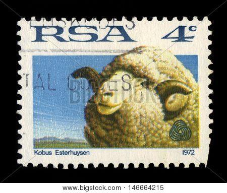 REPUBLIC OF SOUTH AFRICA - CIRCA 1972: A stamp printed in Republic of South Africa shows image merino sheep, kobus esterhuysen, circa 1972