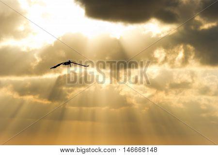 Bird flying silhouette sun rays is a single soul soaring among the golden sunbeam sky.