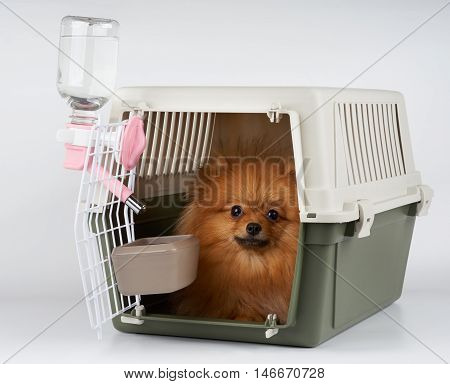 Pet carrier with feeding and watering supply for red Pomeranian spitz ready for long range transportation.