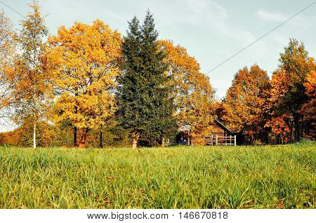 Autumn landscape -small house in yellow autumn trees in sunny autumn weather. Autumn nature view of wooden house in autumn forest -autumn rural landscape view. Autumn nature in vintage tones.
