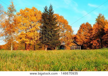 Autumn landscape -small house in orange autumn trees in sunny autumn weather. Autumn nature view of wooden house in autumn orange forest -autumn rural landscape view. Autumn nature in sunlight