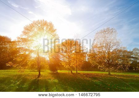 Sunset view of autumn park in the evening. Autumn landscape -yellowed autumn park in autumn sunny evening. Colorful autumn view of sunset park with sunbeams.