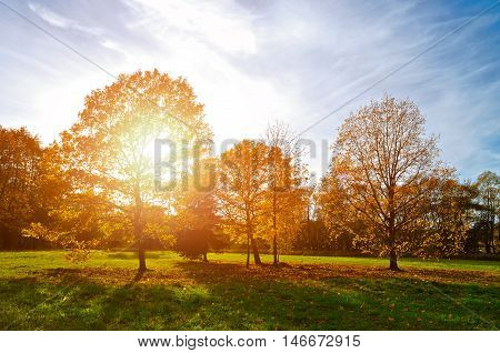 Autumn landscape with autumn trees in the park. Autumn nature -yellowed autumn park in autumn sunny weather. Picturesque autumn view of autumn park. Soft focus applied. Autumn nature in sunlight