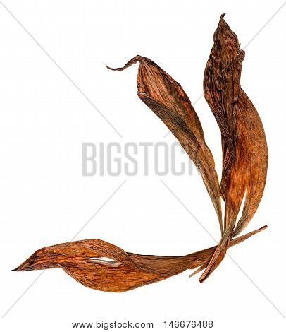 extruded dry orange lily petals isolated on white