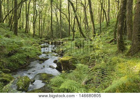 An image of a beautiful stream in the forest on Dartmoor National Park Devon England UK. A slow shutter speed was used to create the milky effect of the water.