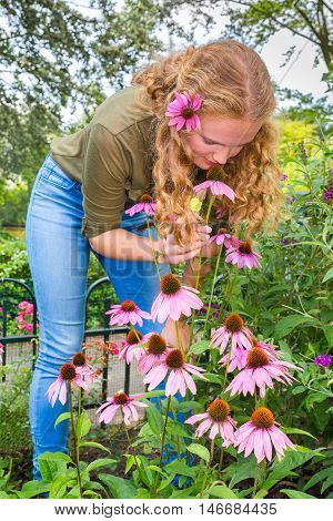 Young dutch woman smelling purple echinacea flower in garden